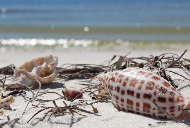 Prime Season To Enjoy Gulf County, FL Adventures